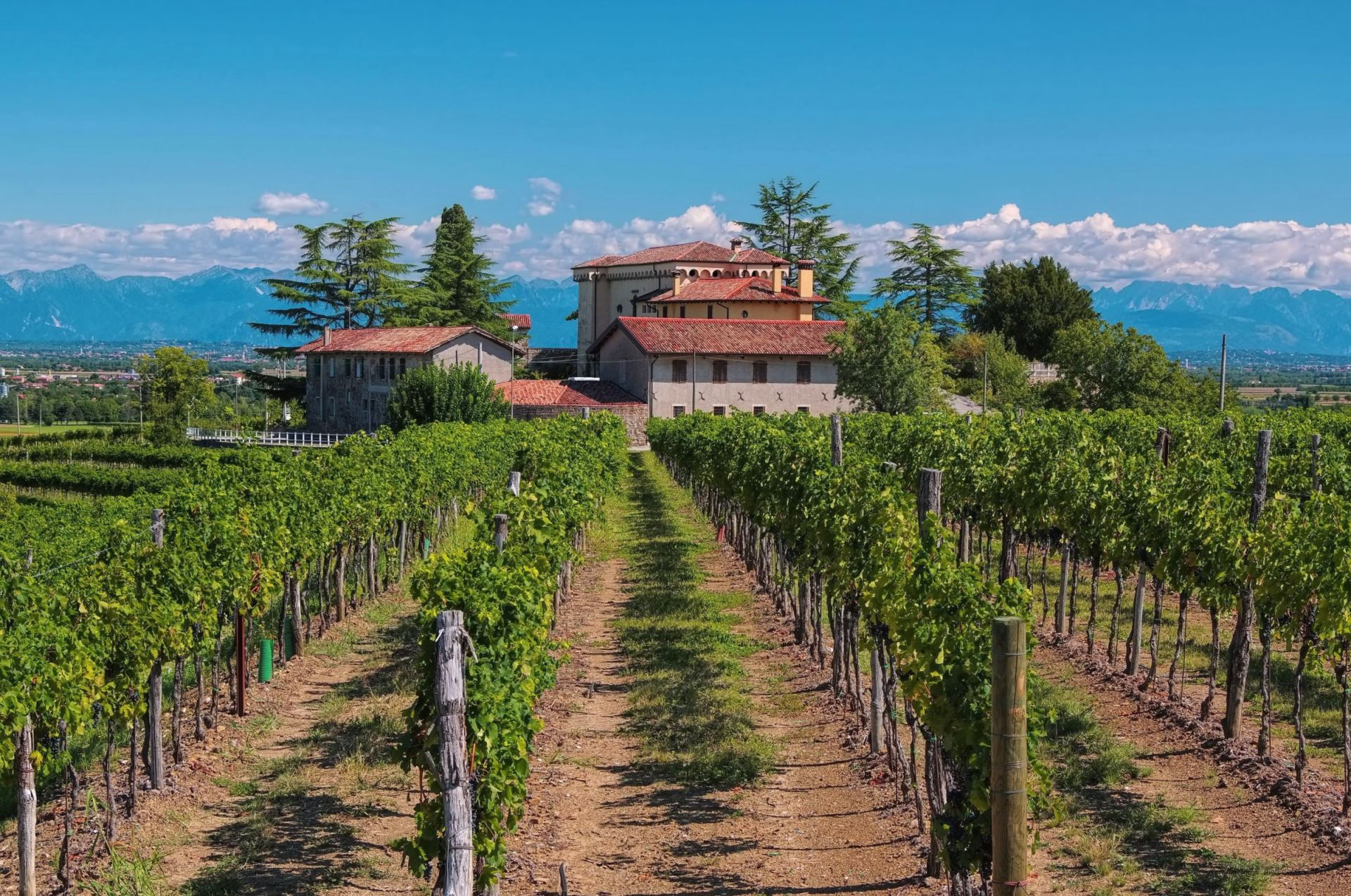 Friuli wijngaard