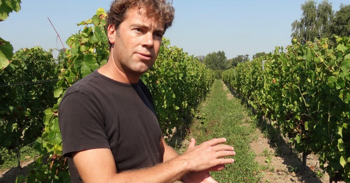 Harry Vorselen wijngaard