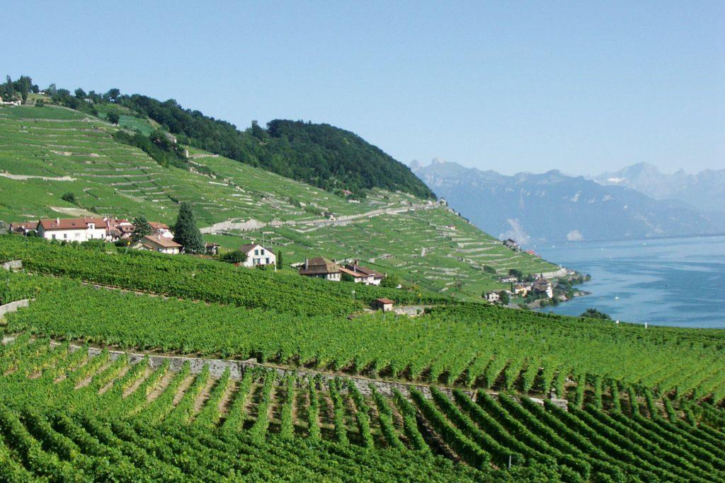 Lavaux wijngaardterrassen