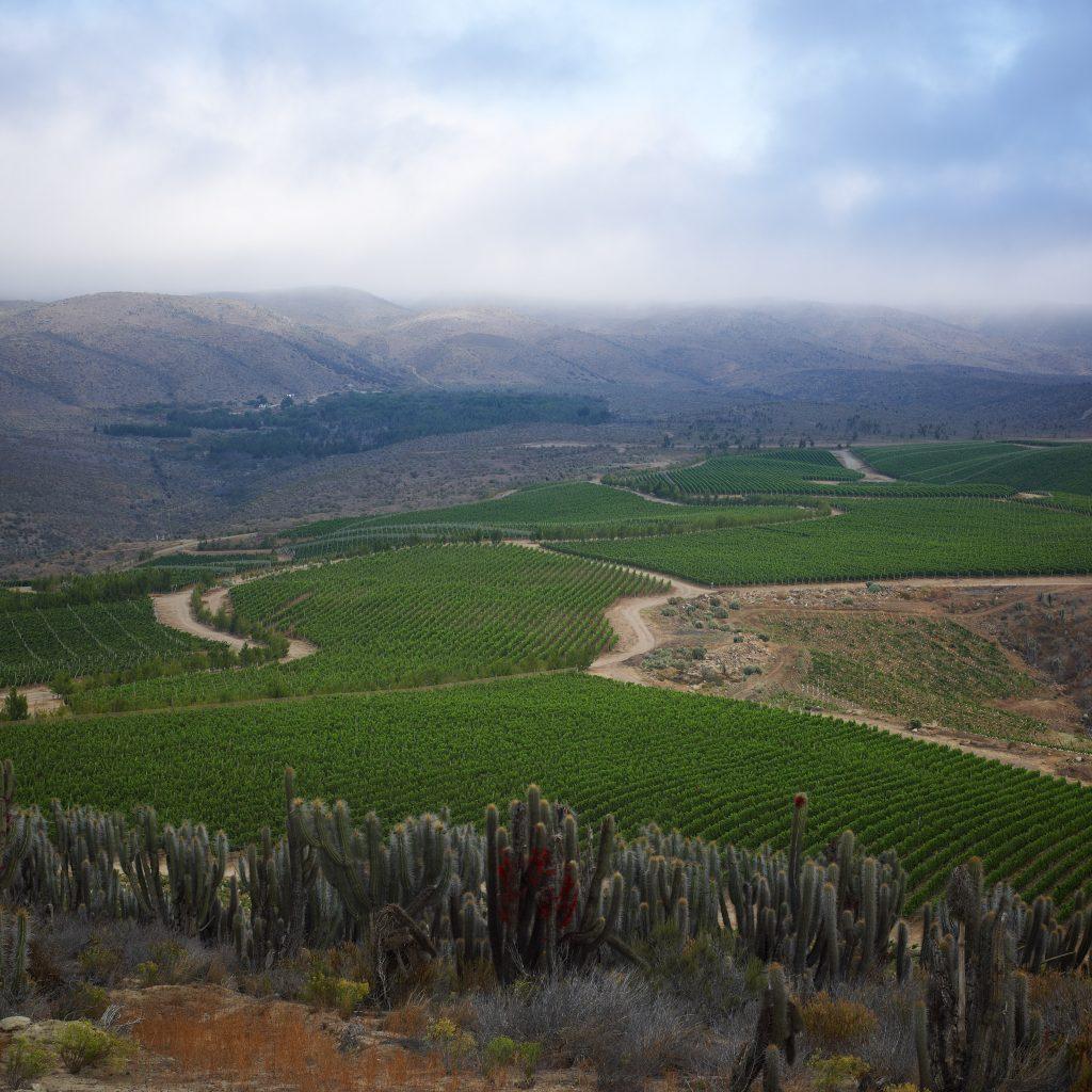 Talinay vineyard (foto ©tabalí)
