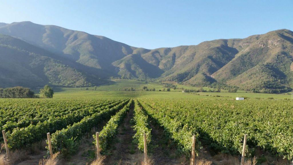 Wijngaard DOM in Maipo (foto ©tabalí)